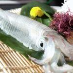 活魚料理 漁火(呼子町/佐賀)